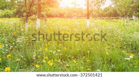 wild flower #372501421