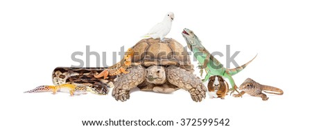 Group of exotic pets sitting together and interacting over white Royalty-Free Stock Photo #372599542