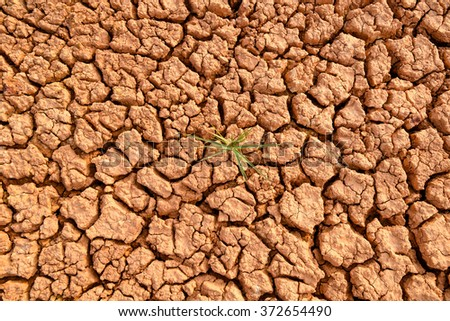 Plant in dried cracked mud #372654490