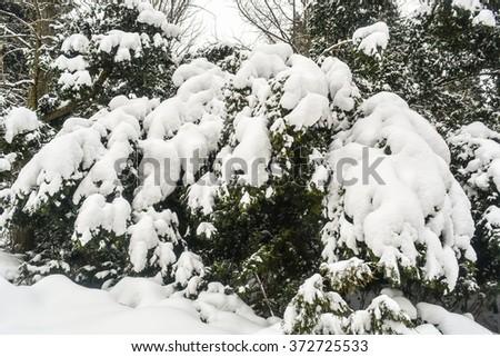 Winter Park, trees, snow #372725533