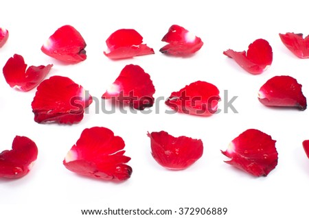 Rose petals on white background #372906889