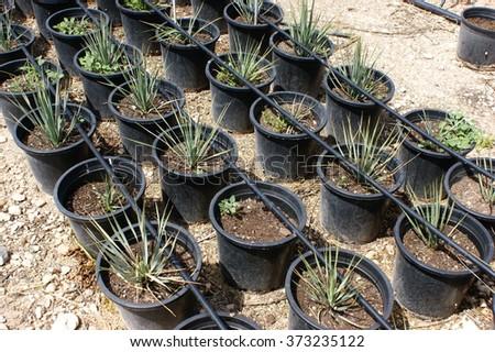 Nursery for plants #373235122