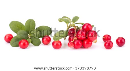 Fresh hand-picked forest Cowberry isolated on white background #373398793