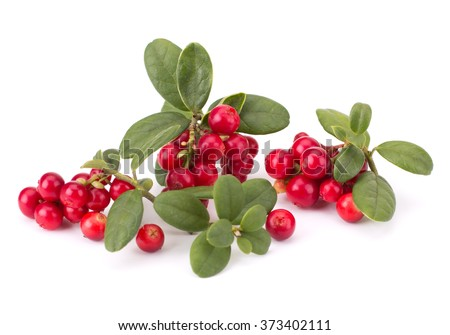 Fresh hand-picked forest Cowberry isolated on white background #373402111