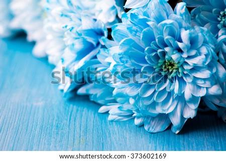 bouquet of fresh blue chrysanthemum flowers #373602169