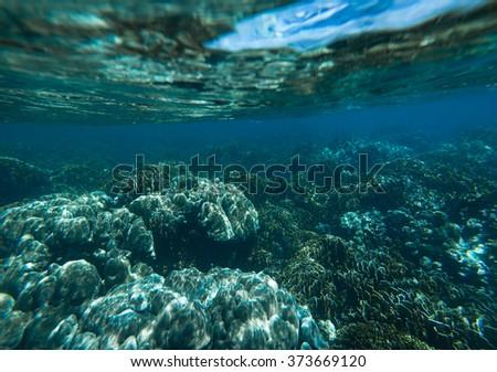 Underwater shoot of coral reef #373669120