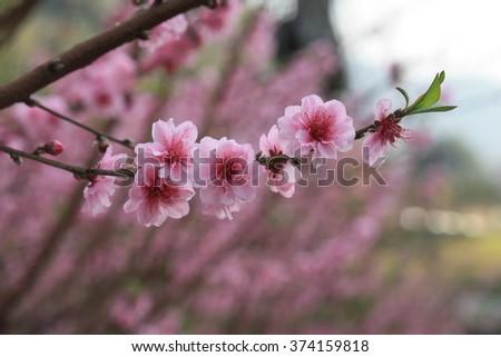 flowers / pink of flowers #374159818