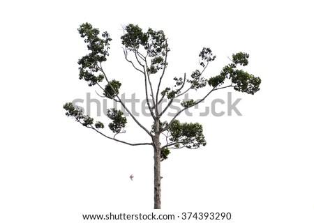 Trees isolated on white background #374393290