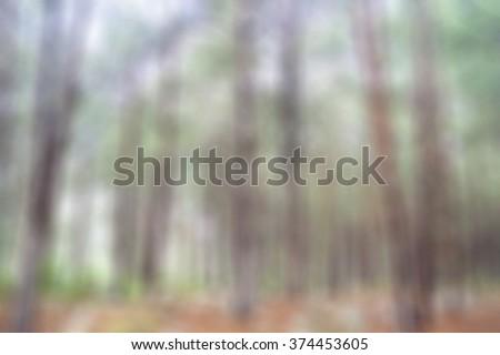 soft blur blured blurry unfocused forest nature tree background wallpaper #374453605