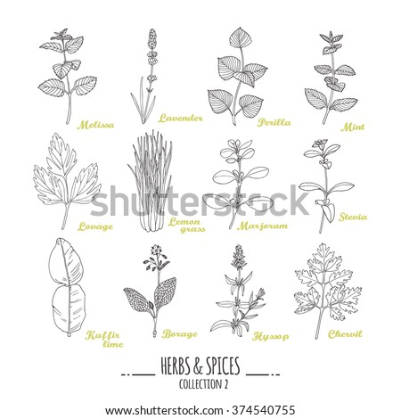 Hand drawn herbs and spices collection. Outline style seasonings. Vector illustration #374540755