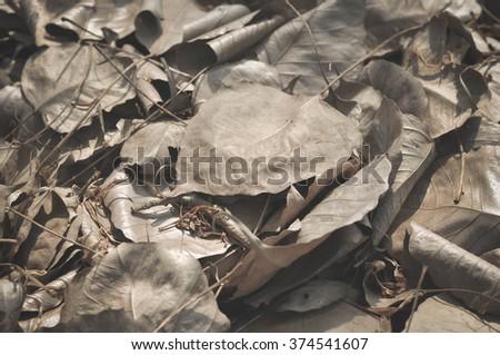 leaf #374541607