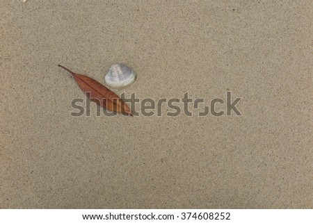 Dry leaf and fossil shell on the beach #374608252
