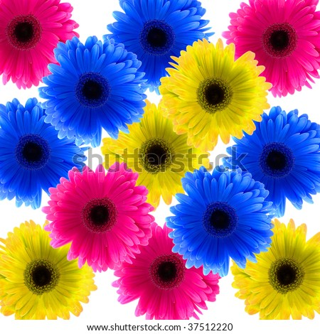 color Daisy flowers #37512220