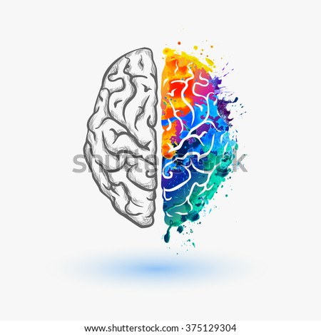 Left and right hemisphere of human brain Royalty-Free Stock Photo #375129304