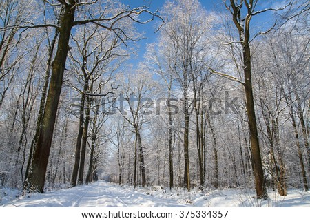 Forest in winter #375334357