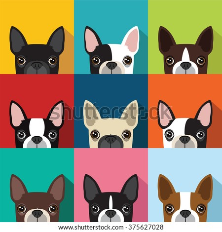 boston terrier pattern,vector full color