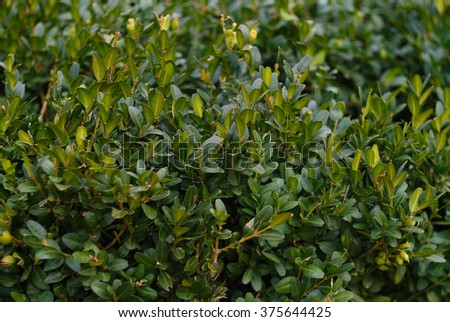 Green leaves  #375644425