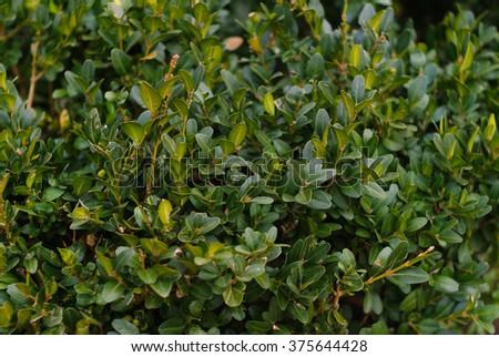 Green leaves  #375644428