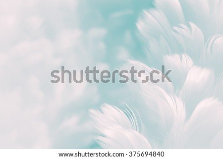 White fluffy feathers on pale teal blue background - Fashion Color Trends Spring Summer 2016 - soft focus Royalty-Free Stock Photo #375694840