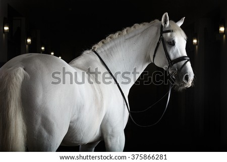 White horse on black background #375866281