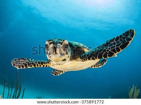 baby turtle face in Caymans