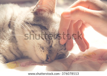woman hand petting a cat head, love to animals, vintage photo #376078513