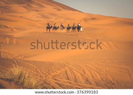 Camel caravan going through the sand dunes in the Sahara Desert, Merzouga, Morocco #376390183