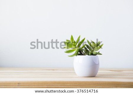 Indoor plant on wooden table and white wall #376514716