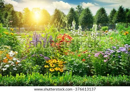 Multicolored flowerbed in park. Sunrise. #376613137