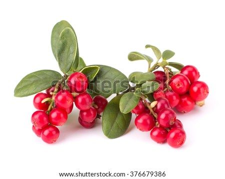 Fresh hand-picked forest Cowberry isolated on white background #376679386