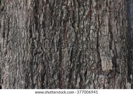 Bark Seamless Tileable Texture #377006941