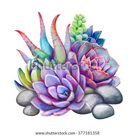 watercolor succulents, decorative illustration, floral clip art isolated on white background