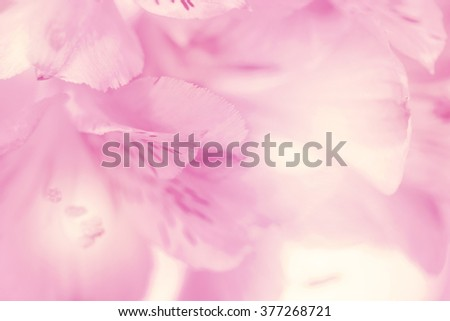 flower on soft pastel color in blur style #377268721