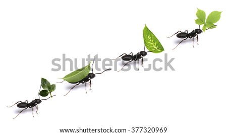 Small ants carrying green leaves, isolated on white. Royalty-Free Stock Photo #377320969