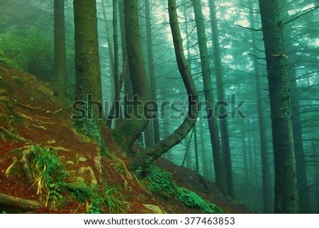 Surreal forest scene: illustration #377463853