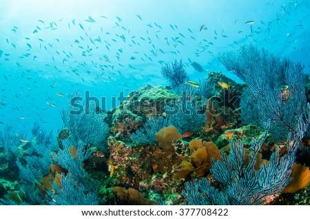 Coral reef scenics of the Sea of Cortez. Cabo Pulmo National Park, Baja California Sur, Mexico.  The world's aquarium. #377708422