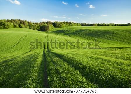 Green wheat field #377914963