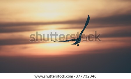 Vintage toned silhouette gull on sunset background #377932348