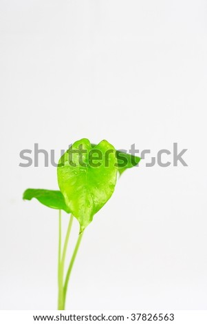 leaves isolated on white background and green concept. #37826563