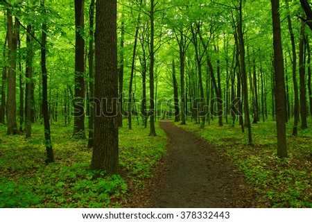 Green forest and the path #378332443