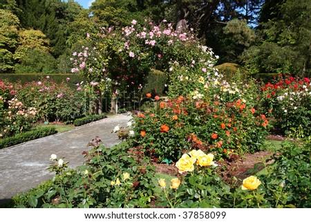 Christchurch Botanic Gardens (New Zealand). Rose garden. #37858099