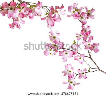 spring  branch with flowers #378678151