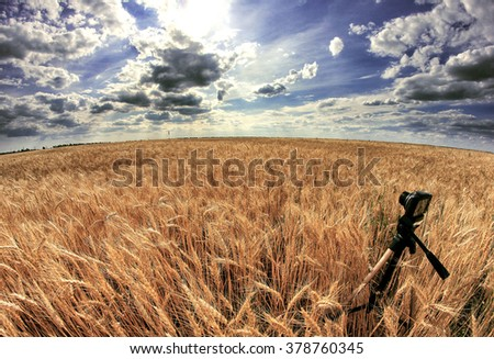 Shooting time-lapse with camera on tripod. Wheat field. #378760345