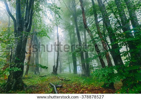 Beautiful colorful foggy forest scene in the Croatian Plitvice National Park  #378878527