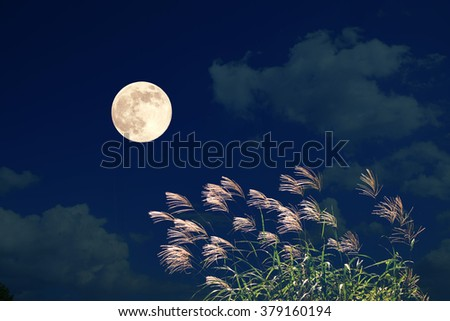 Japanese pampas grass and the full moon