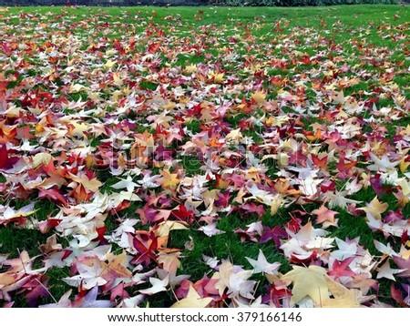 Fallen Leaves #379166146