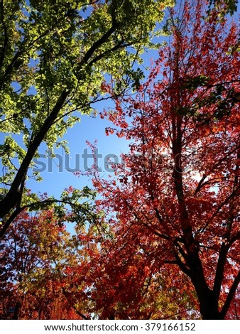 Autumn Trees #379166152