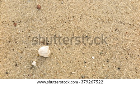 fossil shell on the beach #379267522