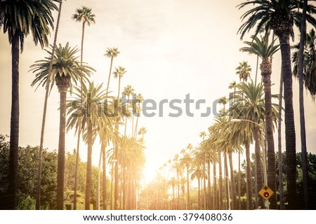 Beverly Hills street with palm trees at sunset, Los Angeles Royalty-Free Stock Photo #379408036