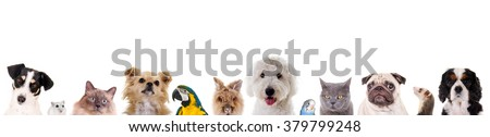 Different pets in a row Royalty-Free Stock Photo #379799248